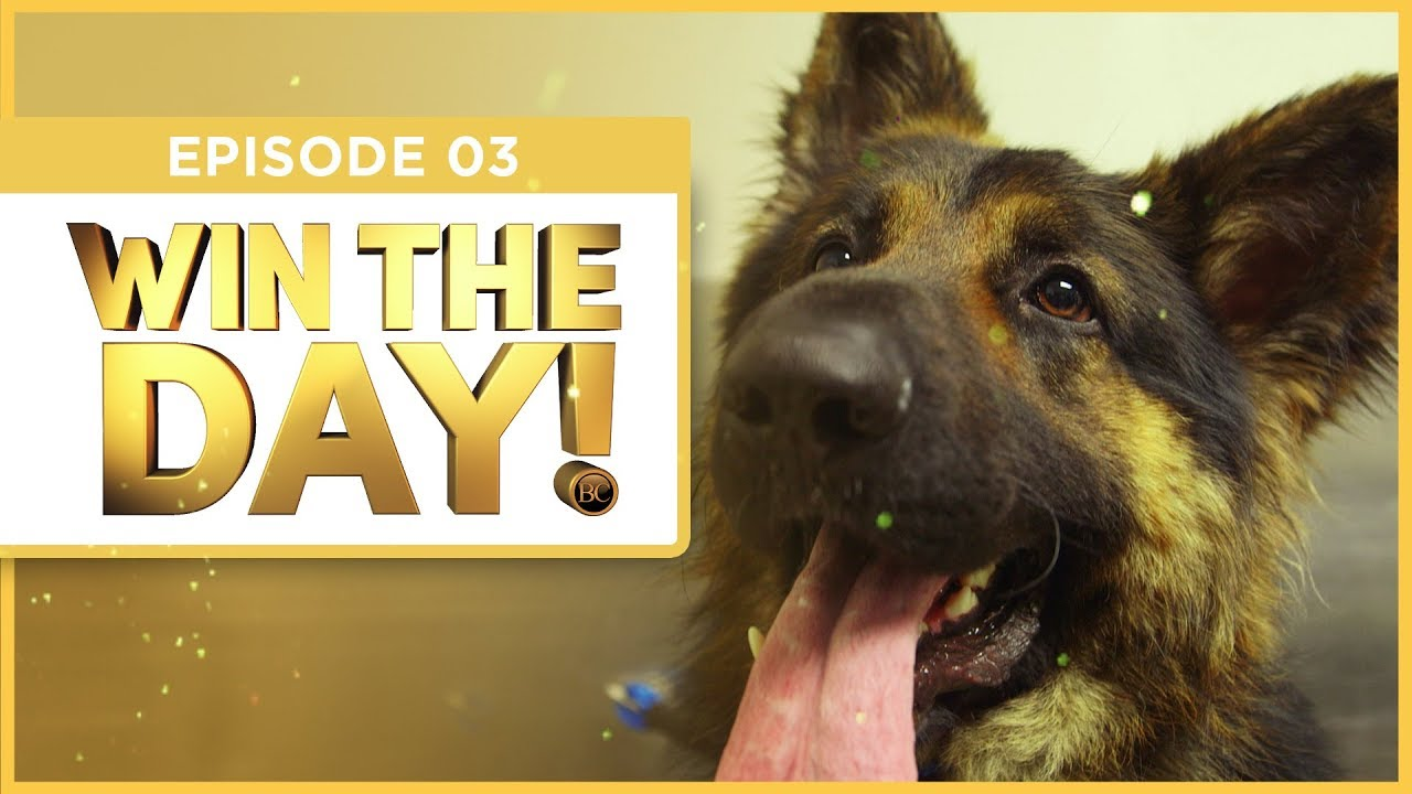 BCTV Win the Day German Shepherd Dog